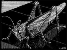 m c escher optical illusion grasshopper