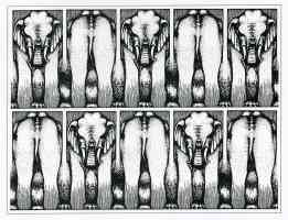 roger shepard optical illusion elephant pattern