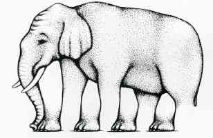 roger shepard optical illusion elephant